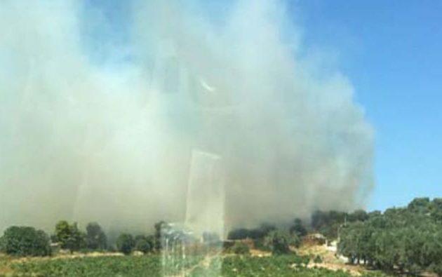 Φωτιά στην Αρτέμιδα Αττικής – Διακοπή κυκλοφορίας στη λεωφόρο Κιάφας