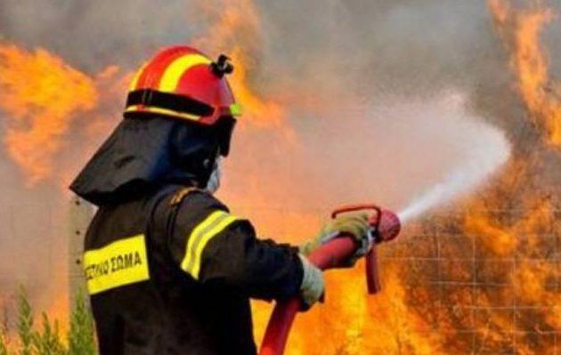 Νέες δασικές πυρκαγιές σε Βοιωτία, Λάρισα, Κέρκυρα, Λακωνία