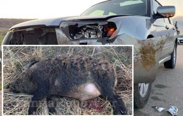 Κι άλλο τροχαίο με αγριογούρουνο στη Φθιώτιδα – Τζιπ συγκρούστηκε με 100 κιλά χοίρο