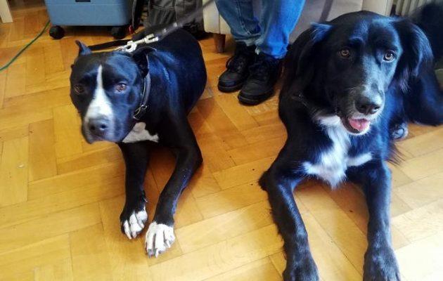 Ποιες ασθένειες στους ανθρώπους «γιατρεύουν» οι σκύλοι θεραπευτές