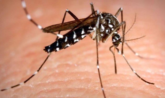 44.000 κρούσματα δάγκειου πυρετού στο Πακιστάν – Μεταδίδεται από το κουνούπι τίγρης