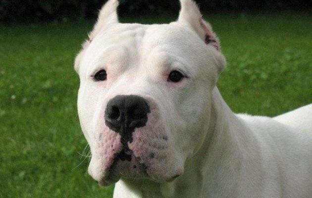 Θρίλερ στο Βόλο με θύμα 70χρονη – Ο σκύλος της προσπάθησε να την σώσει αλλά την δάγκωσε