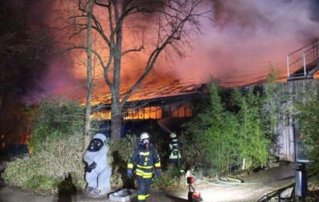 Δεκάδες μαϊμούδες κάηκαν ζωντανές σε ζωολογικό κήπο στη Γερμανία από πρωτοχρονιάτικα πυροτεχνήματα