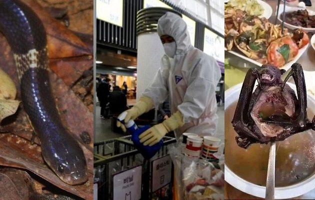 Φίδια και νυχτερίδες μετέδωσαν τον νέο κοροναϊό – Δεν υπάρχει ακόμη αντιική θεραπεία