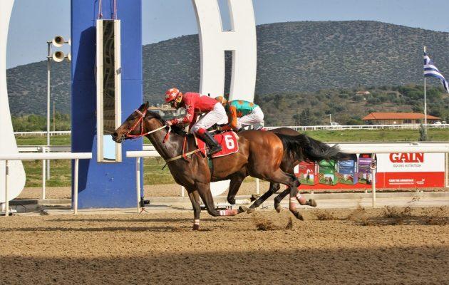 Εννέα ιπποδρομίες, τέσσερα ΣΚΟΡ και επιδότηση Γκανιάν την Κυριακή στο Markopoulo Park
