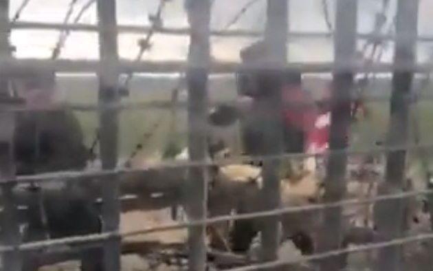 Δεν είναι μετανάστες – Είναι Γκρίζοι Λύκοι και Αλ Κάιντα που κάνουν «μπάχαλα» στον Έβρο