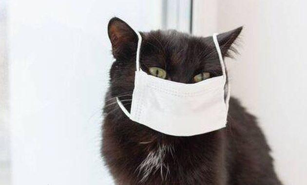 Μια ακόμα γάτα -αυτή τη φορά στην Ισπανία- θετική στον κορωνοϊό