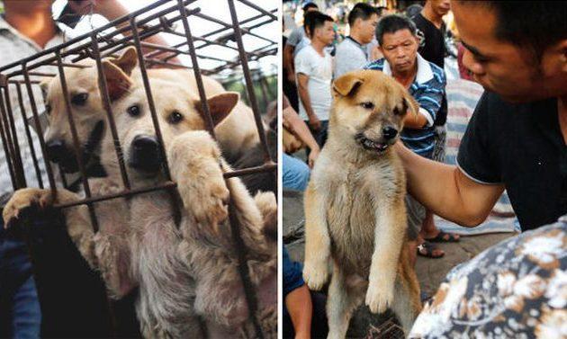 Ξεκίνησε στην Κίνα το φεστιβάλ που τρώνε σκύλους
