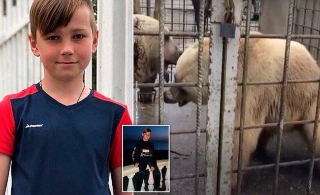 Φρίκη: Αρκούδες κατασπάραξαν 11χρονο μπροστά σε δύο φίλες του