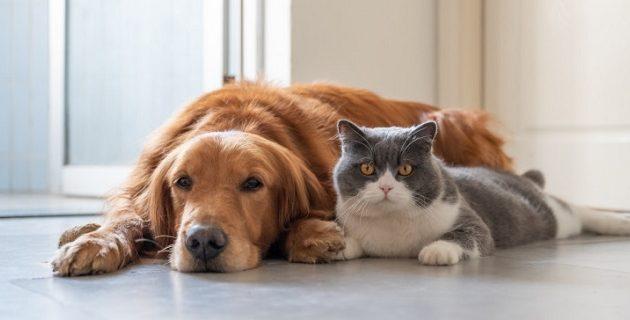 Σκύλος και μια γάτα κόλλησαν κορωνοϊό στη Γερμανία