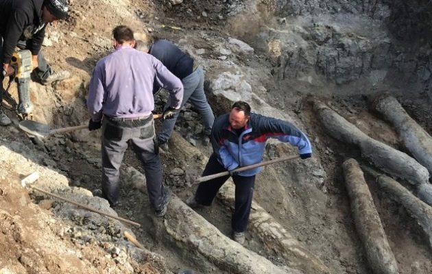 Λέσβος: Τι μαρτυρούν οι απολιθωμένοι κορμοί δέντρων που βρέθηκαν στις νέες ανασκαφές