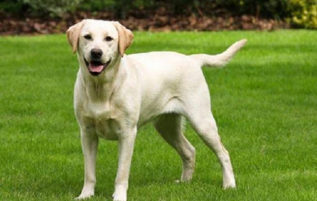 Ο στρατός της Ινδίας επιστρατεύει σκύλους για να εντοπίζουν τον κορωνοϊό