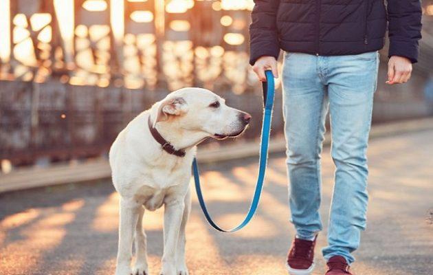 Πρόστιμο 300 ευρώ σε όσους βγάζουν βόλτα τον σκύλο χωρίς λουρί