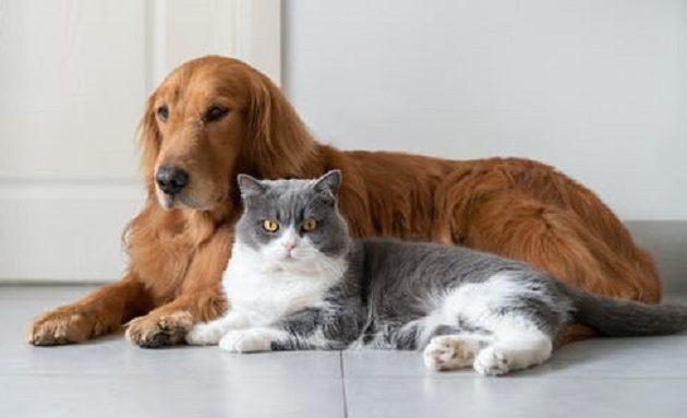 Κορωνοϊός: Η «βρετανική» μετάλλαξη βρέθηκε για πρώτη φορά σε σκύλους και γάτες σε Ευρώπη και ΗΠΑ