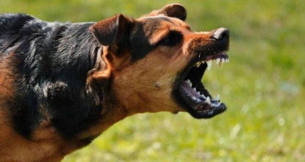 Σκυλιά κατασπάραξαν 4χρονο στη Ρωσία