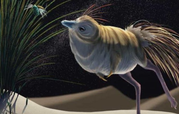 Αυτό το «γλυκό πουλάκι» ήταν ένας δεινόσαυρος νυχτερινός θηρευτής