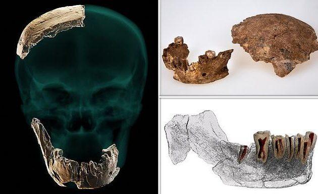 Άγνωστος έως τώρα Homo, ο Nesher Ramla, ανακαλύφθηκε στο Ισραήλ