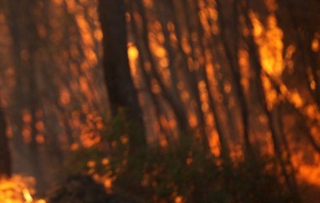 Φθιώτιδα: Οριοθετήθηκε η φωτιά στο Λογγίτσι