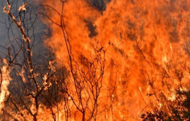 Μεσσηνία: Σε εξέλιξη η φωτιά στο Βασιλίτσι – Απομακρύνθηκαν προσωρινά οι κάτοικοι